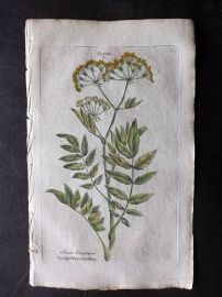 Hill & Culpeper 1792 HCol Botanical Print. Water Parsnep.